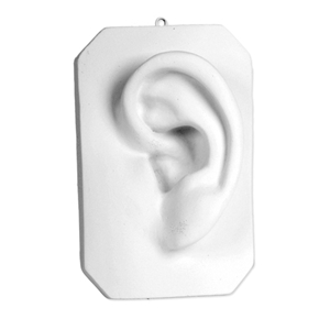 Plaster Study Cast - Ear